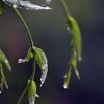 My Home Enviro - Gallery: Lockdown Rain